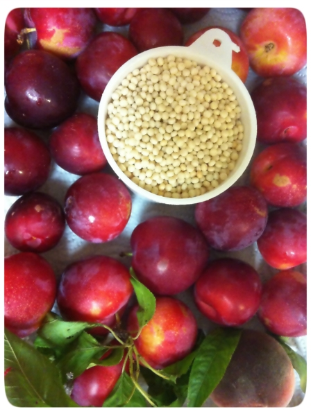 Freshly picked plums and a cup of pear couscous.