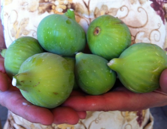 Homegrown Figs