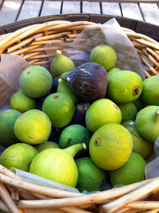 Basket of Homegrown Figs