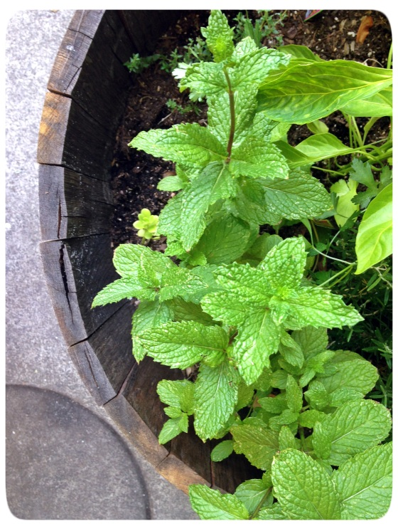 Aprons Herb Garden