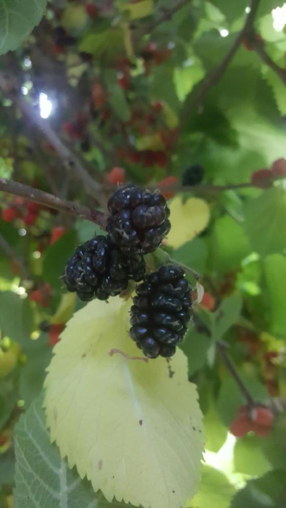 Mulberr Tree Aprons & Stilettos
